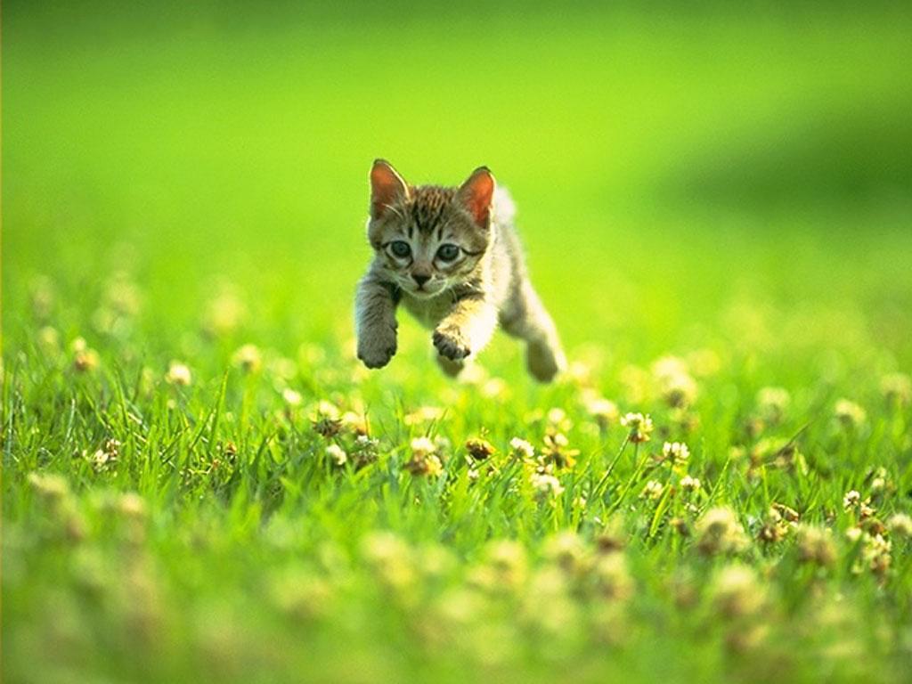 cute kitten 631 4