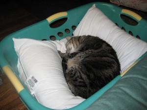 Carpe dormio - seize the nap.