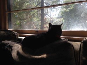 Zoe contemplates the nature of life, the bother of travel, and the noisiness of woodpeckers.